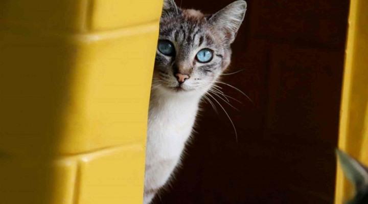 Unidade atenderá, gratuitamente, cães e gatos e vai estimular adoções de pets.